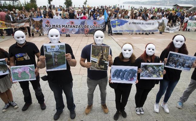 Grupos conservacionistas reclaman el fin del «sacrificio» de lobos en Asturias