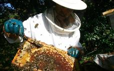 Las intensas lluvias y la falta de sol hunden la producción de miel en Asturias