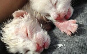 Rescatadas dos crías de gato de un contenedor de basura en La Felguera