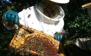 Los productores tachan de «catastrófica» la campaña de la miel por la lluvia