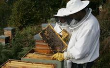 Podemos e IU piden más ayudas para los apicultores ante una campaña «catastrófica»