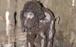Denunciados un padre y su hija por el maltrato de dos perros en Valdés
