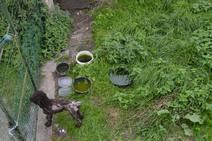 Rescatan a dos perros desnutridos y con sarna en Valdés