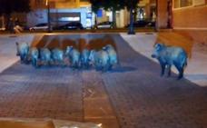 Una familia de jabalíes, de paseo por el barrio ovetense de La Florida