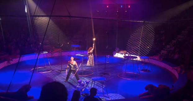 Un tigre sufre un ataque de epilepsia en el circo y la reacción de su domador indigna