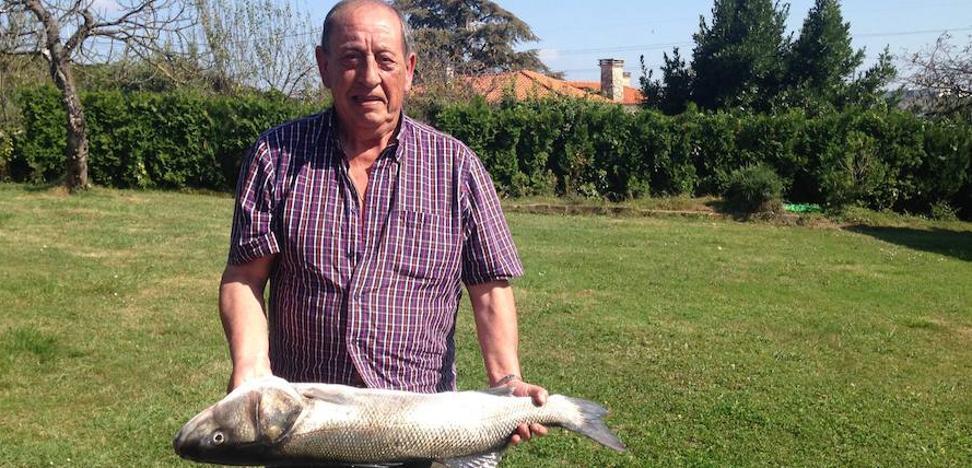 Pescan una lubina de siete kilos en Llanes