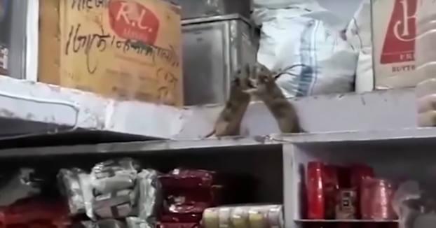 El restaurante, las ratas y una pelea...