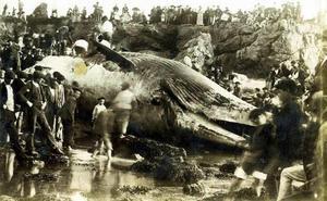 123 años yendo a ver la ballena