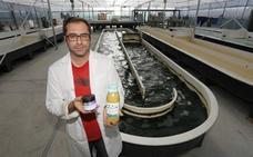 «Las microalgas aportan valor nutricional a los platos»