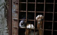 Un langreano recoge a un perro de la calle y ahora la perrera no se hace cargo de él