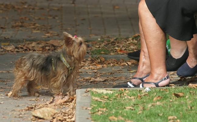 Se enfrenta a un año de cárcel por matar a un perro de una patada en Trasona