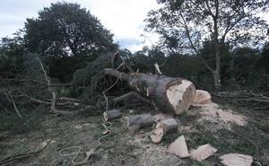 Herido muy grave un hombre al que le cayó un árbol encima mientras lo talaba en Colloto