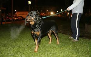 La Policía Local de Avilés denuncia a 38 dueños de perros potencialmente peligrosos