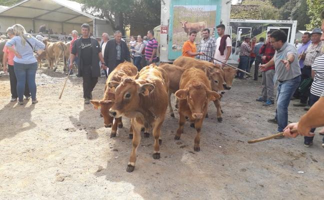 Más de 2.000 cabezas de ganado acudieron a la feria de Santa Teresa