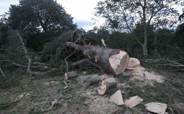 Herido muy grave tras caerle encima el árbol que talaba en Oviedo