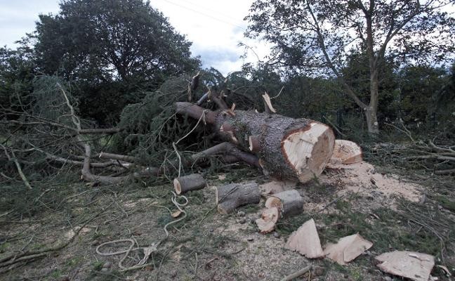 La Guardia Civil investiga las circunstancias del accidente en la tala de un árbol en Moreo