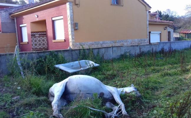 Un caballo lleva cinco días muerto en un prau de El Cuto