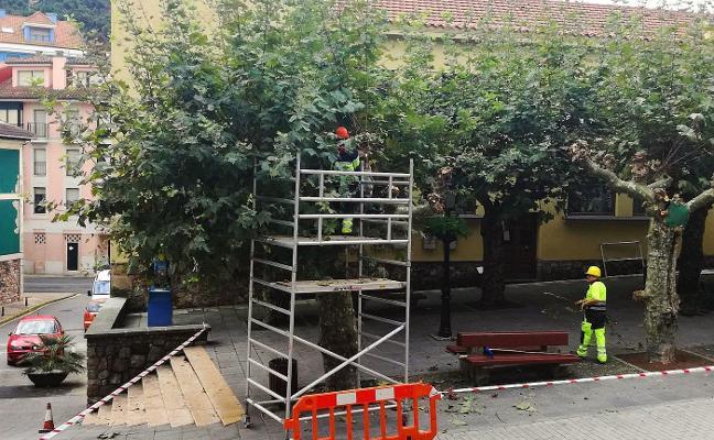 Comienzan los trabajos de poda de árboles en las calles de Candás