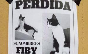 Ofrecen recompensa por encontrar a una gata perdida en Viesques