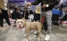 Espacio Mascotas abre sus puertas en Gijón