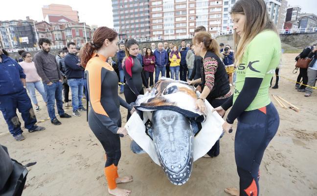 Cómo salvar a un delfín
