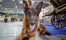 'Espacio Mascotas': el paraíso de los caninos