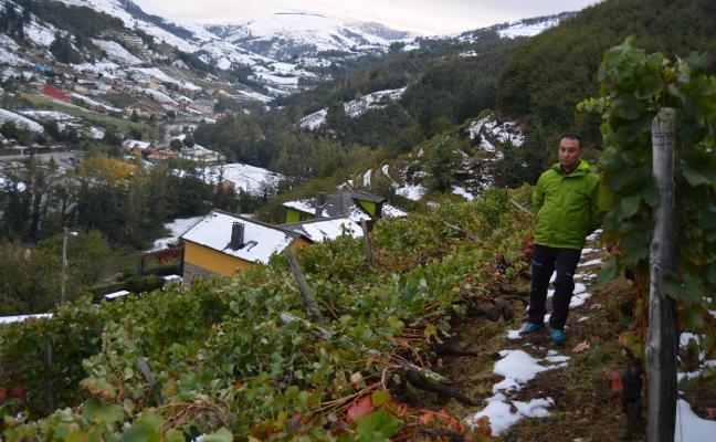 Vides, manzanos y castaños, «los más perjudicados por el peso de la nieve en sus ramas»