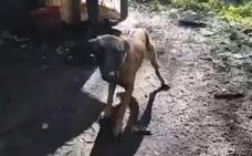 La Policía Local localiza en Anieves un perro desnutrido