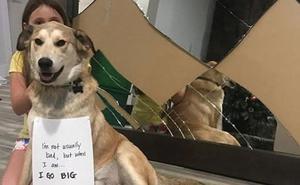 El perro que nunca entra en casa hasta que sus dueños le abren una puerta invisible