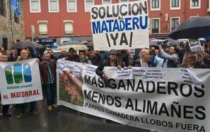 Los ganaderos llevan a Arriondas sus protestas por la gestión del lobo