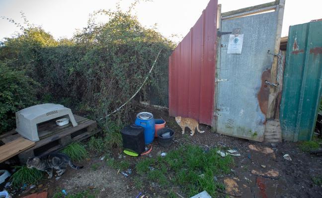 La perrera de La Luz quedará clausurada en la primera semana de diciembre