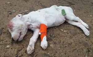 Aparece en Gijón un perro muerto y con un orificio en la cabeza