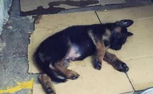 La Policía de Granada adopta a un cachorro que fue «pateado como si fuera un balón» por su dueño
