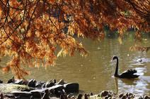 La belleza del otoño en Gijón