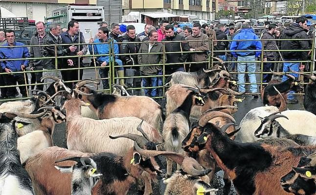 ovejas  Hemeroteca | elcomercio