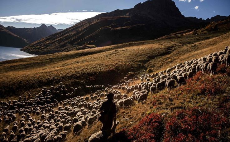 Estampas de vida de un pastor en los Alpes franceses