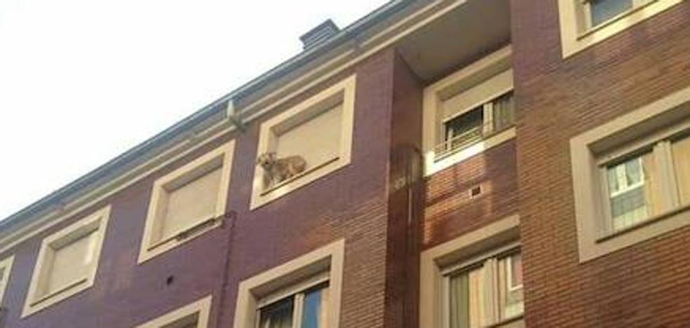 Angustioso rescate de un perro en un alféizar de un tercer piso de la calle Dolores