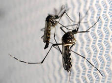 Científicos españoles desarrollan una vacuna contra el zika