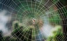Descubren una avispa que convierte a las arañas en drones zombies a sus órdenes