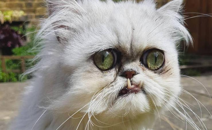Este es Wilfred Warrior, el gato más viral