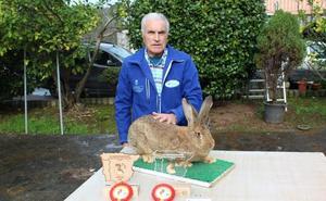 El mejor conejo de España, criado en Carreño, pesa 7,4 kilos