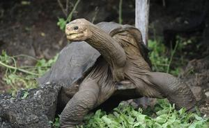 Otín encuentra en las tortugas gigantes de las Galápagos las claves de la vejez