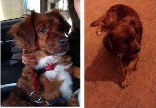 Siero se moviliza para encontrar a 'Travis', un perro desaparecido desde el viernes