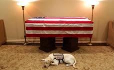 La conmovedora imagen de Sully, el perro de George H. W. Bush que lo acompañó hasta el final