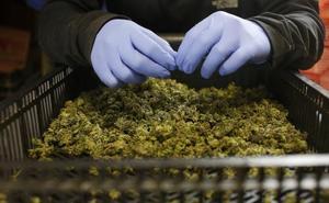 La legalización de la marihuana divide a los españoles