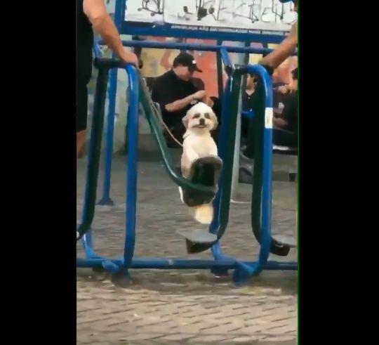 Vídeo: La felicidad de este perrito ha cautivado las redes sociales