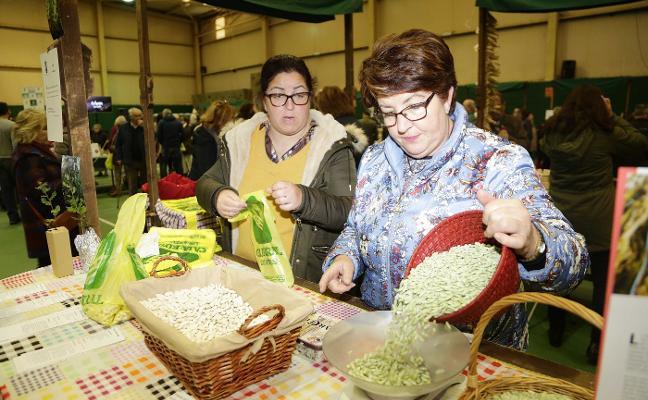La cosecha de fabes mengua en Colunga a los trescientos kilos en un «mal año»