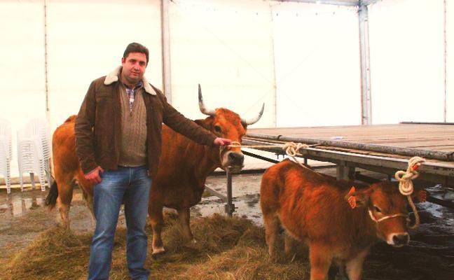 El Principado asegura que las subastas de las xatas están permitidas en Asturias