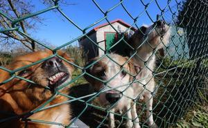 El consorcio prevé tener elegida la finca para el albergue de animales en marzo