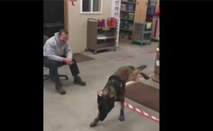 El simpático vídeo de un perro policía con botas de nieve
